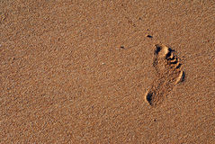 Footprint. Foot print of a kid on wet sand Stock Photo