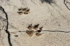 Footprint on Gobi Royalty Free Stock Photo