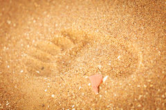 Footprint in golden sand on the shore of the sea Royalty Free Stock Image