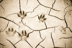 Footprint left on a muddy sand by a dog paw. Little vignette effect added.  royalty free stock photo