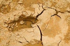 footprint mud Στοκ Φωτογραφίες