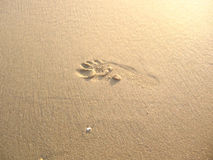 Footprint. Print of foot on the wet sand Stock Photo