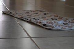 Dog paw prints on carpet royalty free stock image