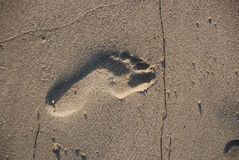 Footprint in the Sand Stock Photos