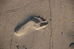 Footprint in the Sand. A footprint left behind on the beach Stock Photos