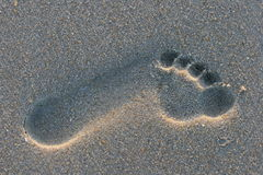 Footprint in the sand Stock Image