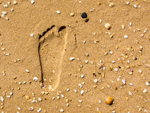 Footprint in the sand. Left foot print in the sand near a beach with lots of seashells. Can be used to signify holiday beach and other tourism related concepts Royalty Free Stock Photography