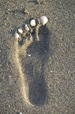 Footprint in the sand on the beach Stock Photography