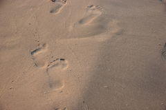 Footprint in the sand on a beach Stock Image