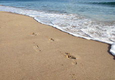 Footprint on sand in beach Stock Photos