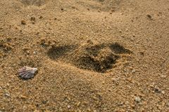 Footprint on the sand. Footprints on the sand of the beach with a sea shell Royalty Free Stock Photo