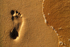 A footprint in the sand. The footprint of man in wet yellow sand on the beach in the evening stock photography