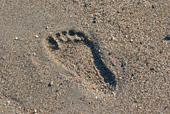 Footprint in the sand. Stock Photo