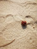 Footprint in sand with red ladybug closeup Royalty Free Stock Photo