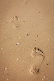 Footprint on sand Stock Image