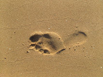 Footprint on sand Royalty Free Stock Image