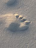 Footprint in the beach sand Stock Images