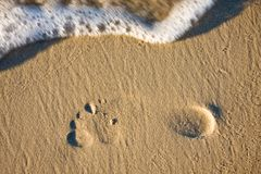 Footprint on a sandy beach Stock Image