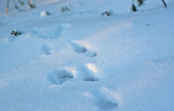 Footprint and shadow on snow Royalty Free Stock Images