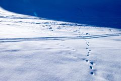 Footprint of small animal and ski tracks on snow powder. In Zermatt, Switzerland Royalty Free Stock Image