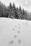 Footprint in the snow. In mountain Royalty Free Stock Image