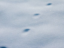 Footprint in snow Stock Photos