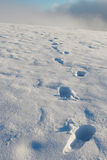 Footprint in the snow Royalty Free Stock Photo