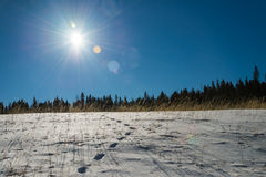 Footprint on snow  and blue sky with Sun flare Royalty Free Stock Photography