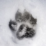 Footprint in the snow Royalty Free Stock Image