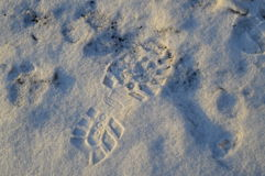 Footprint in the snow with shadows from the sun Stock Photo