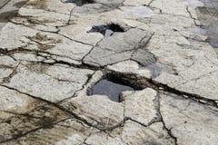 Footprint stone dinosaur Stock Photo