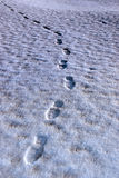 Footprint tracks on a links golf course Royalty Free Stock Image