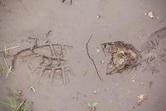 Footprint in wet mud Stock Image