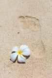 Footprint on white sand Royalty Free Stock Photo