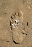 Footprint with white seagrass on beach Stock Images
