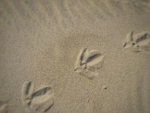 footprints images stock