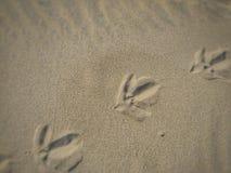 footprints obrazy stock