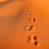 Footprints. In the sand of El Chebbi dessert in Morocco stock photos