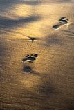 Footprints. On wet shining sand on the beach royalty free stock images