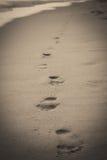 footprints Стоковая Фотография RF