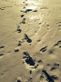 footprints Obrazy Royalty Free