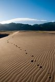 Footprints. Going across the sand in the early morning Stock Image