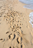 footprints Photos libres de droits