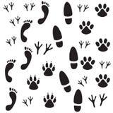 footprints Стоковое Изображение