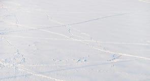 footprints стоковое фото