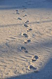footprints Zdjęcia Royalty Free
