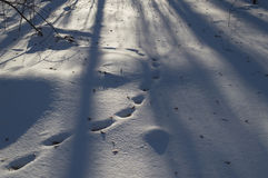 footprints image stock
