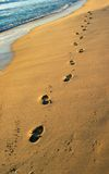Footprints. At the Beach royalty free stock photos