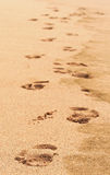 Footprints. Footprint in the sand Stock Photography