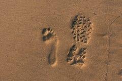 footprints Стоковые Изображения RF